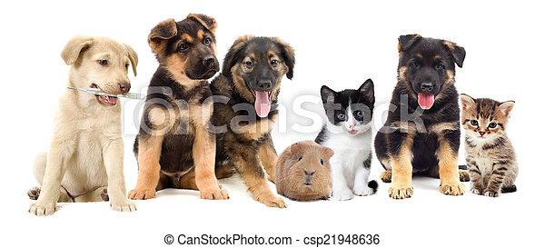 hundebabys, aussehen - csp21948636