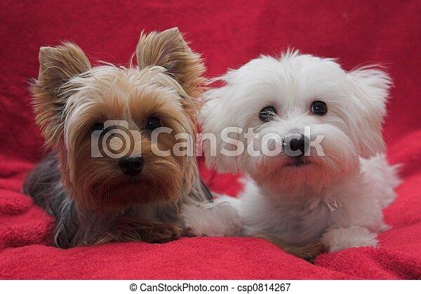 hundebabys, bezaubernd - csp0814267