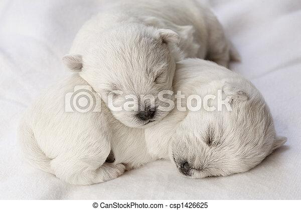hundebabys, eingeschlafen - csp1426625