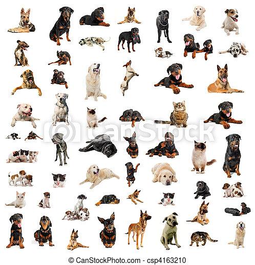 hundebabys, hunden, katzen - csp4163210