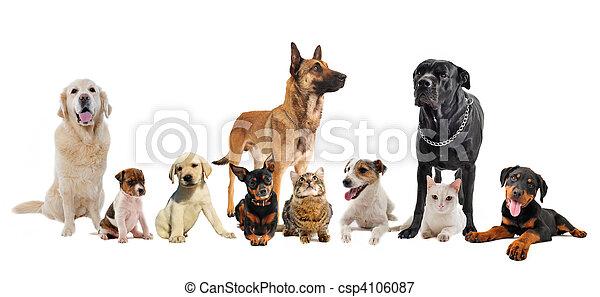 hundebabys, katzen, gruppe - csp4106087