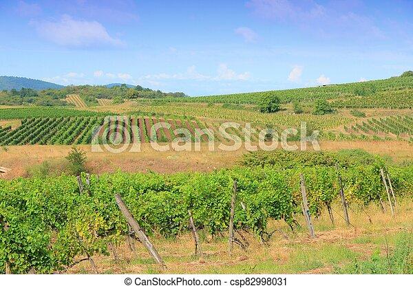 Hungary wine land - csp82998031