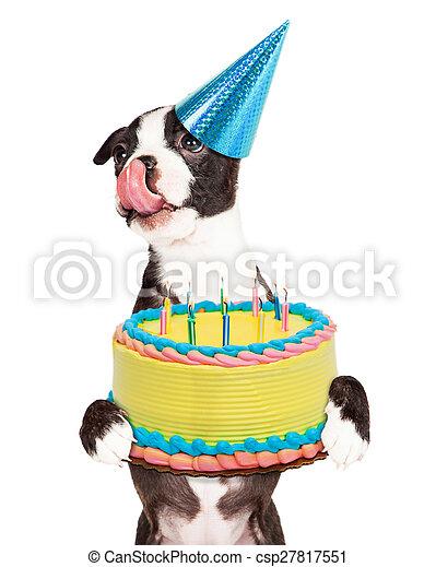 Sensational Hungry Birthday Puppy Holding Cake Cute Little Boston Terrier Funny Birthday Cards Online Inifodamsfinfo