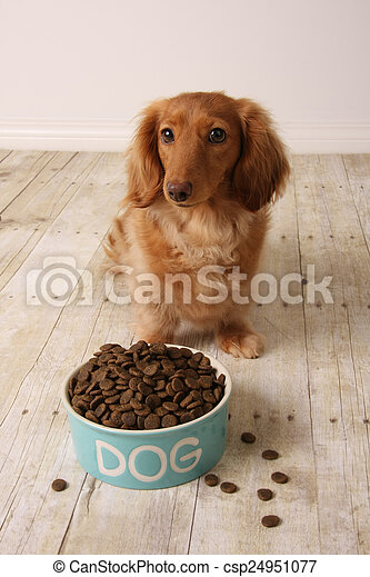 Hungry dog and food.  - csp24951077