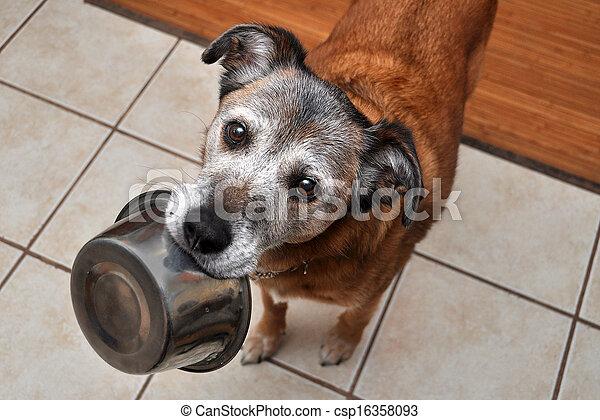 Hungry dog - csp16358093