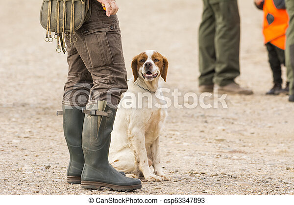 Hunter hunting with dogs in nature - csp63347893