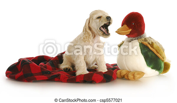 hunting dog - csp5577021