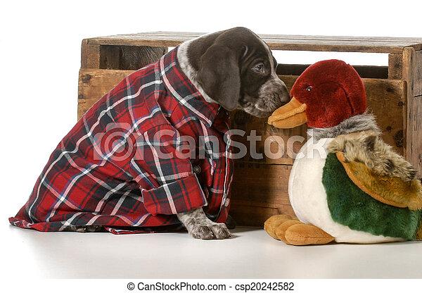 hunting dog - csp20242582