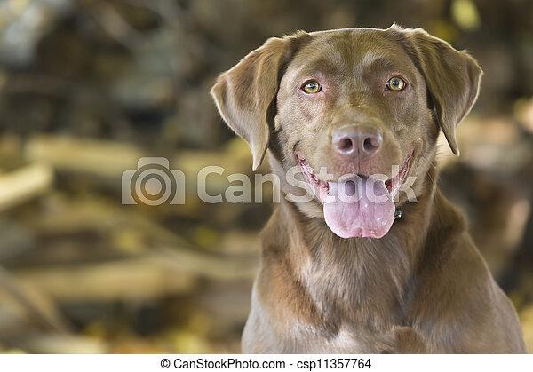 Hunting Dog - csp11357764