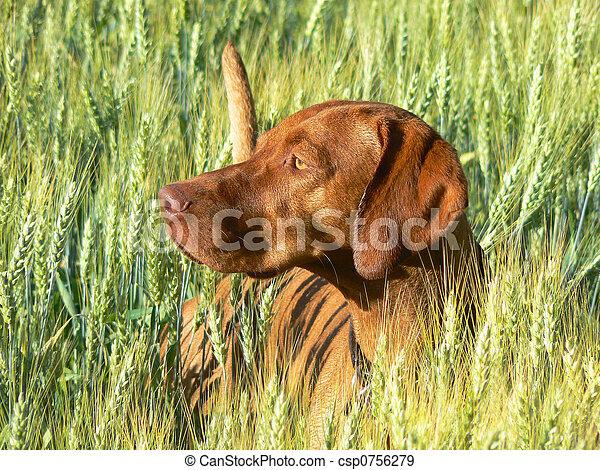 Hunting Dog - csp0756279