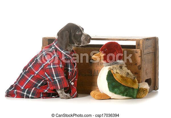 hunting dog - csp17036394