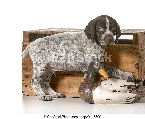 hunting dog - csp20118590