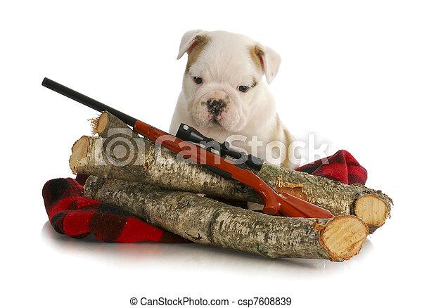 hunting dog - csp7608839