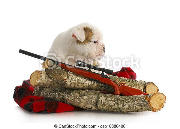hunting dog - csp10886406