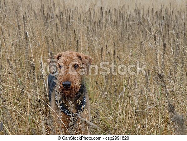 Hunting dog - csp2991820