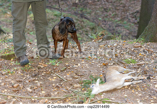 hunting dog with hunter in forest - csp22914499