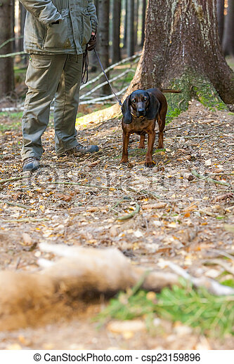 hunting dog with hunter in forest - csp23159896