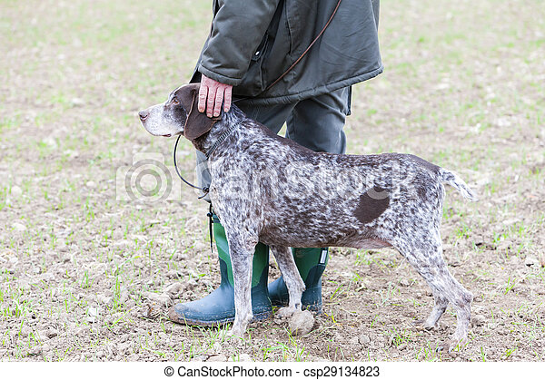 hunting dog with hunter - csp29134823