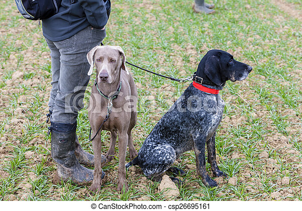 hunting dogs with hunter - csp26695161