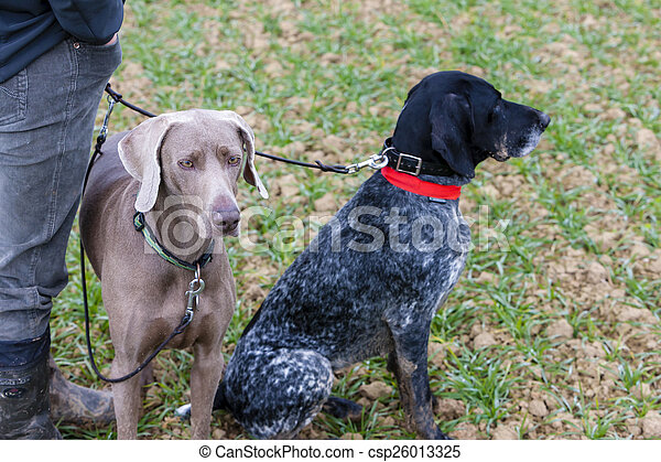 hunting dogs with hunter - csp26013325
