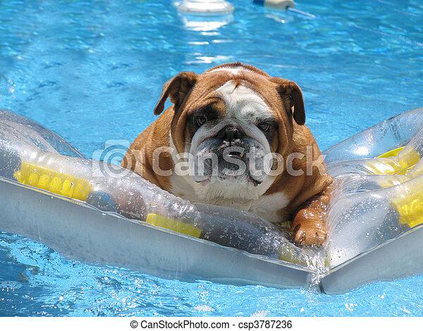 husdjuret, hotell, semester, familj, vänskapsmatch - csp3787236