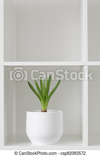 Hyacinth plant in a white pot. - csp82083572