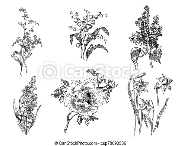 Hyacinth, tulips, lily of the valley, lilac, peony, forget me not, and daffodils - csp78093336