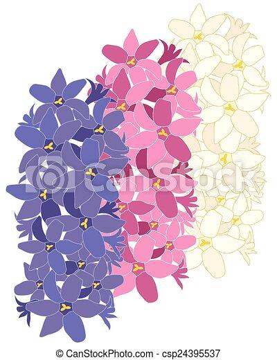 Hyazinthe, blume, design. Hyazinthe, weisse blumen, rosa ...