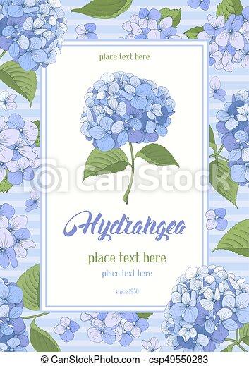 Hydrangea card - csp49550283