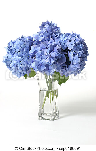 Hydrangeas in Vase - csp0198891