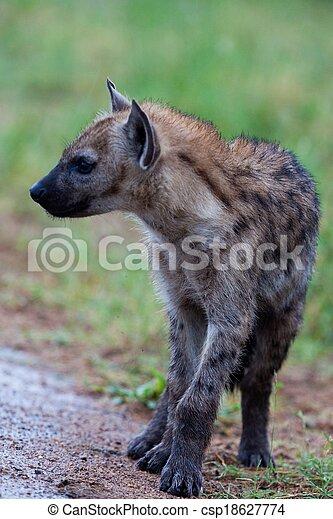 Hyena in the wild - csp18627774