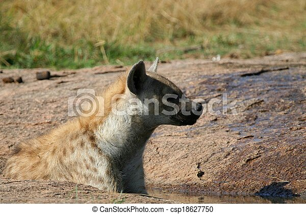 Hyena in the wild - csp18627750