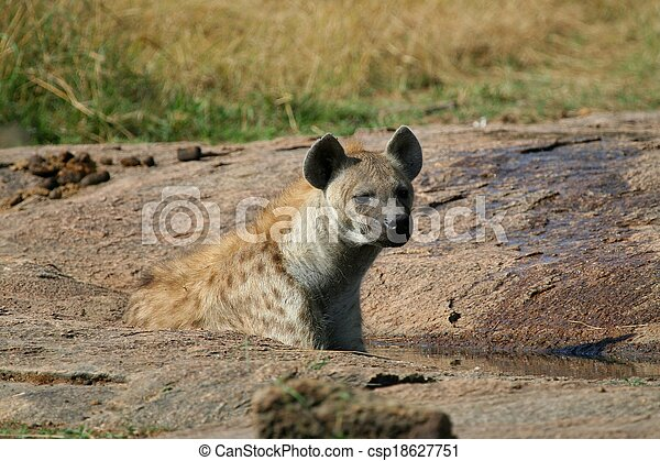Hyena in the wild - csp18627751