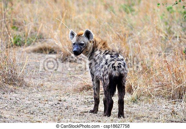 Hyena in the wild - csp18627758