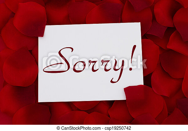i am sorry card a white card with text sorry and a red rose pedal