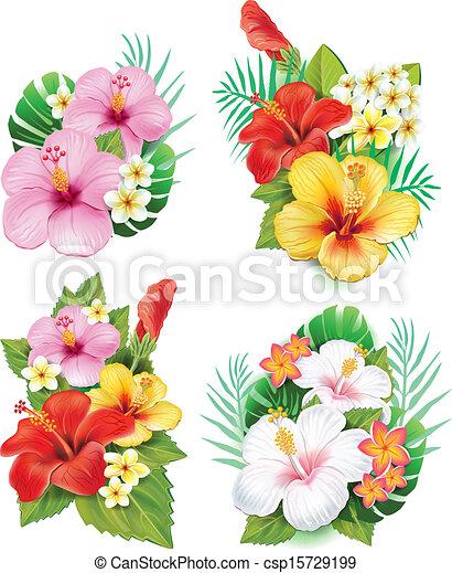 ibisco, fiori, disposizione - csp15729199