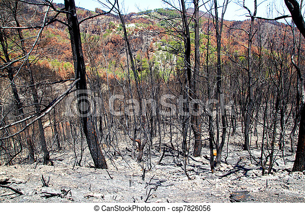 Ibiza after fire in May 2011 black spring - csp7826056