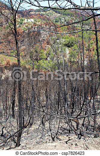 Ibiza after fire in May 2011 black spring - csp7826423
