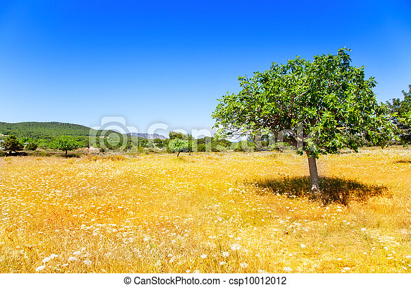 Ibiza agriculture with fig tree and wheat - csp10012012