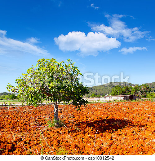 Ibiza mediterranean agriculture with fig tree - csp10012542