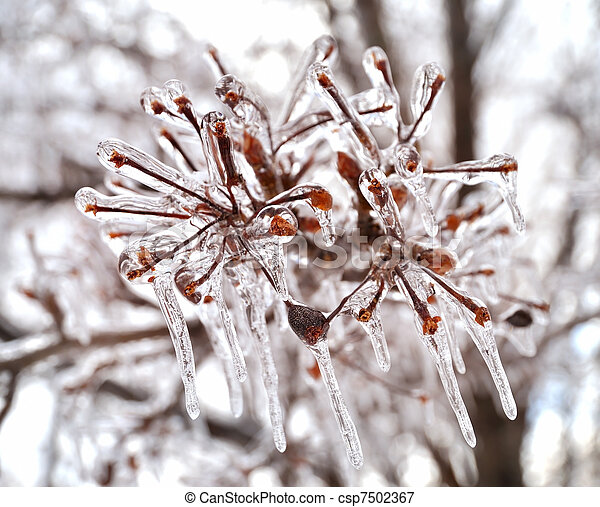 ice on a tree branches - csp7502367