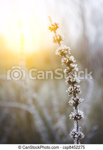 ice on plant stems - csp8452275
