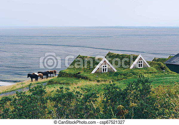 Iceland horses and typical small house in Iceland. - csp67521327