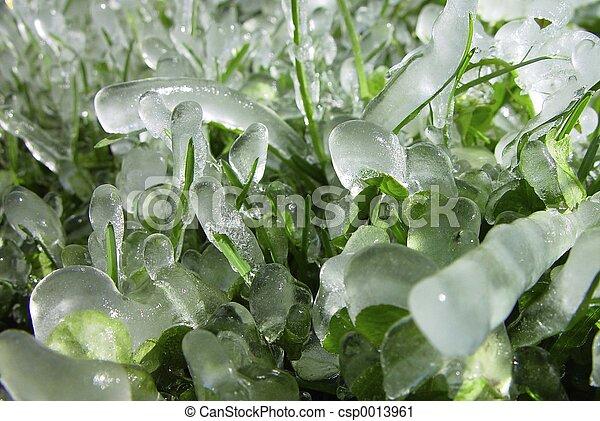 icewonder - csp0013961