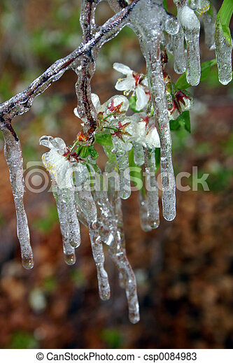 Icy Blossoms - csp0084983