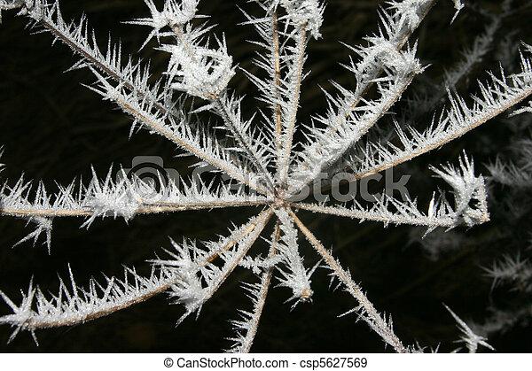 Icy flower - csp5627569