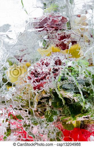 icy roses - csp13204988