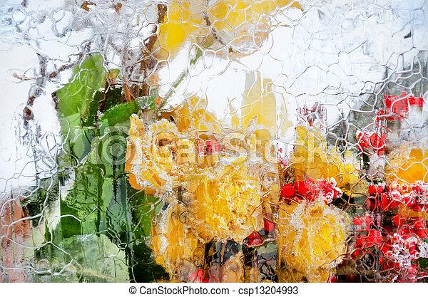 icy roses - csp13204993