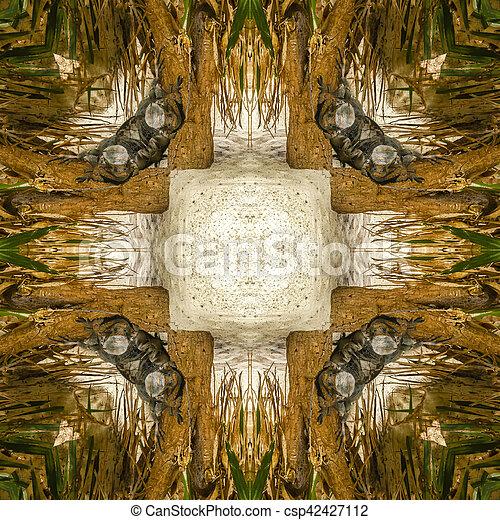 iguana abstract 3 - csp42427112