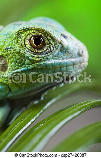 Iguana in the wild, bright colorful vivid theme - csp27426387